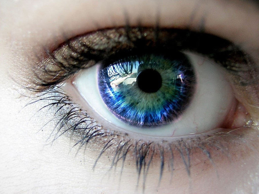 the characteristics of the eye vision and color blindness