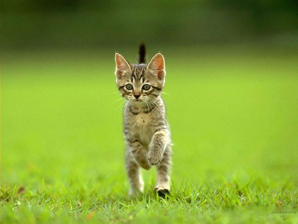 25 фото котят