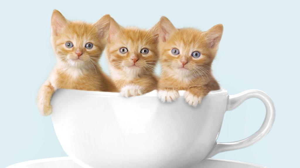 Модные котята
