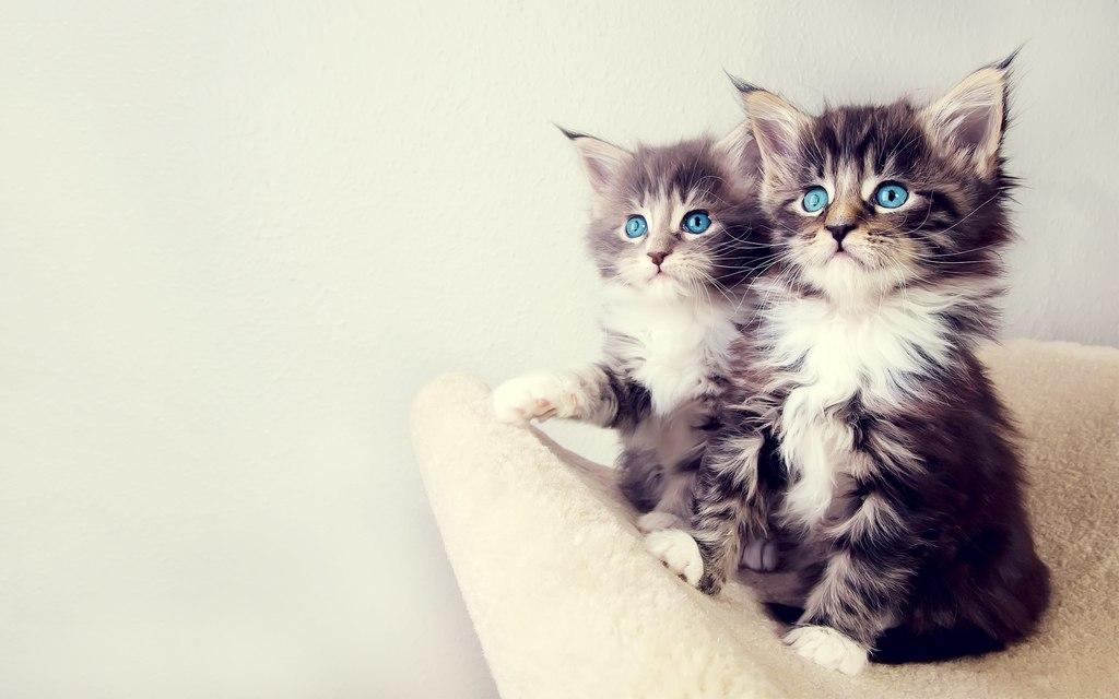 крутые фото котят