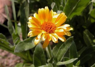 растения для ухода за кожей